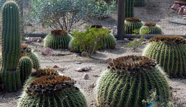 Landscaping Ideas California Cactus Center