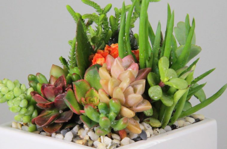 Succulent Wedding Centerpiece California Cactus Center